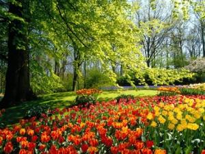omg, tulips