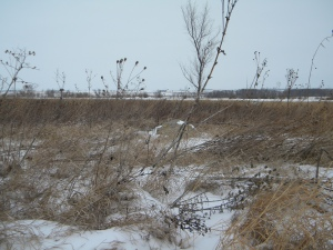 prairie in winter