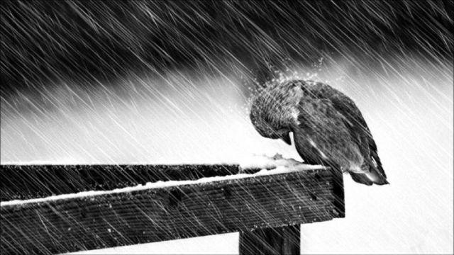 sad-rain